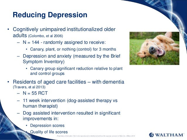 therapy dog application process depression and anxiety